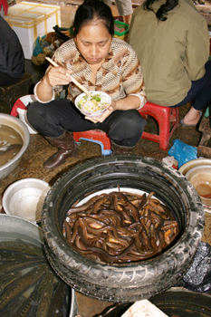In the Old Quarter, one vendor offers live eels