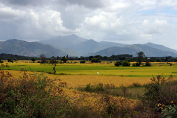 View over a rice paddy