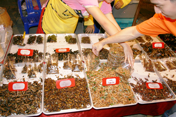 Fried crickets at street food stall in Chiang Mai Thailand