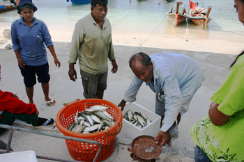 Selling the morning catch on the beach on phi phi thailand