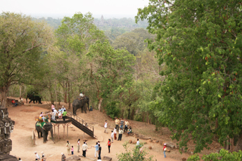 Looking down at the elephants from the top of Phnom Bakheng temple Angkor Wat