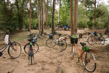Landscapers ride ancient bicycles to work at Angkor Wat