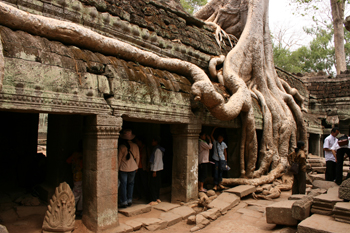 Giant tree roots have taken over at Ta Prohm temple, site of the filming of Anglina Jolie
