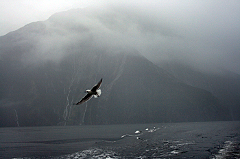 Misty Milford Sound New Zealand