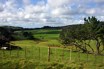 Lush greenery of the Northlands New Zealand