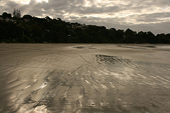 Low tide at one of Waiheke's many beaches New Zealand