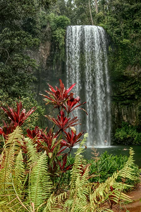 Millaa Millaa Falls in the Atherton Highlands in NE Australia