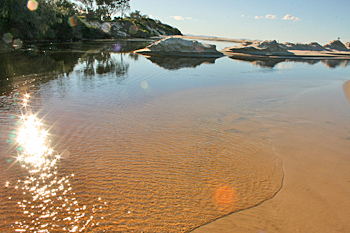 Mounds of sand along Belongil Creek Byron Bay Australia