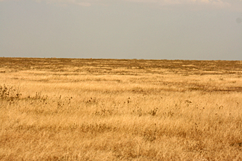Flat plains of the Serengeti in Tanzania