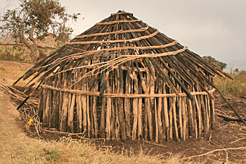 Building a new traditional Maasai hut n Tanzania