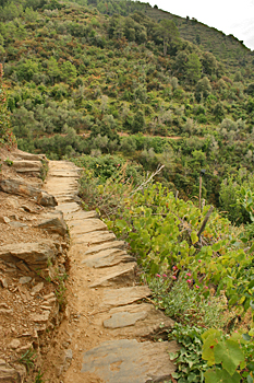 Typical trail between the five villages of Cinque Terre Italy
