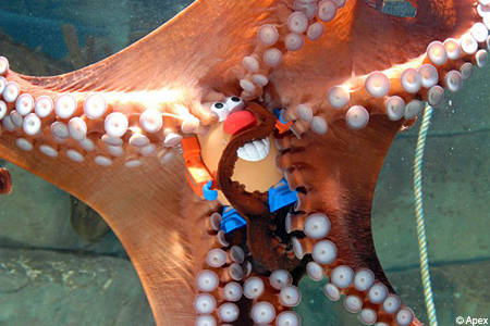 Louis the octopus and Mr Potato Head Blue Reef Aquarium United Kingdom