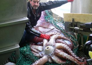fishing boat with colossal squid