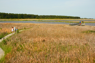 Outer Banks birdwatching