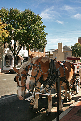 Fredericksburg downtown Clydesdale drawn carriage