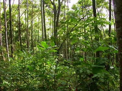 Incredible biodiversity exists just ten short years after restoring a tropical rainforest on a parcel of played-out pasture land in Costa Rica