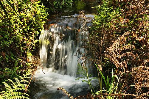 dunnellon_rainbow_springs_state_park4