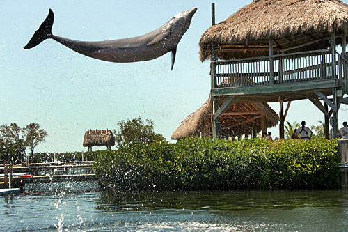 dolphin_research_center2