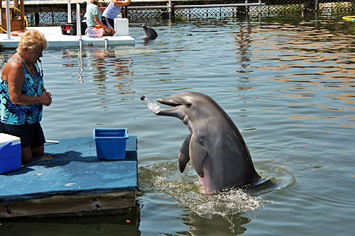 dolphin_research_center4