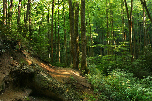 Trail to Moore Cove Falls turns emerald green in late afternoon sun