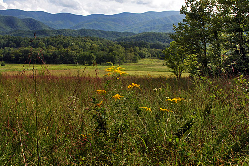 Cades_Cove_Meadow