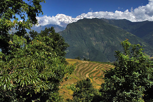 Annapurna Himalayas loom over the valley beneath Puma village, framing gorgeous rice terraces awaiting harvest