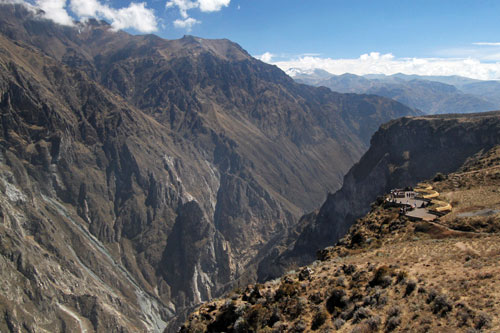 Andean Condors nest on the high cliffs of Colca Canyon, where they take off with the assistance of thermal updrafts