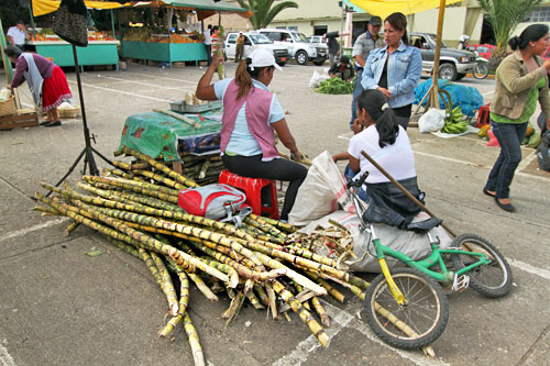 Got a hankering for something sweet? Buy a hunk of sugar cane and chew out the cane juice