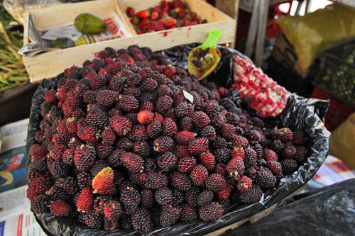 Mora berries, found throughout Ecuador and Peru, make delicious juices and desserts