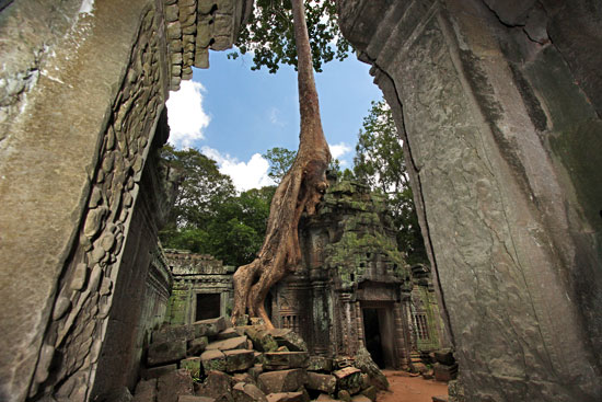 Giant kapok trees have overgrown temple walls at Ta Prohm