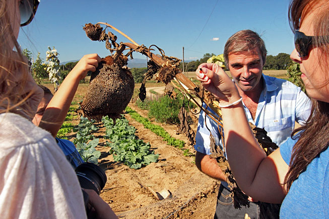 Munching on seeds from a giant sunflower in the organic garden at Agroturisme Sant Dionis