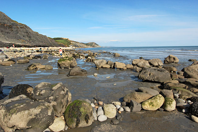 The beaches in Charmouth yield the best and most abundant numbers of fossils
