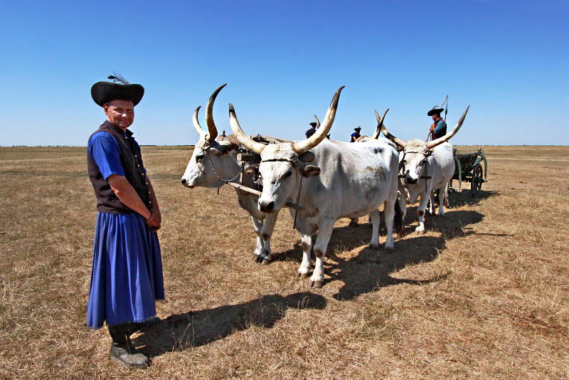 Hungary-Hortobagy-Hungarian-Grey-Cattle-and-Shepherds-in-Traditional-Costumes