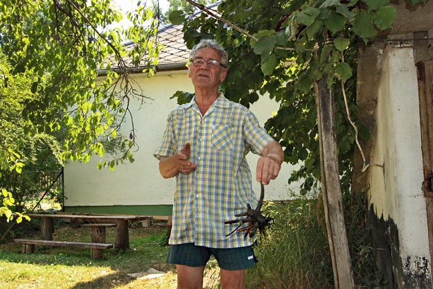 Bela Makay, noted herbalist in eastern Hungary, displays some of the local roots and leaves he uses in his herbal cures