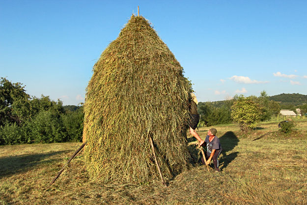 Shimmying down from the top of the haystack, using a long tree limb