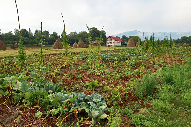 Every home has a huge gardens, which provides all the fruits and vegetables for the family