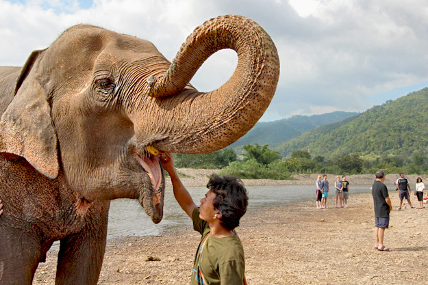 Mahout rubs the elephant's tongue after his bath at the river