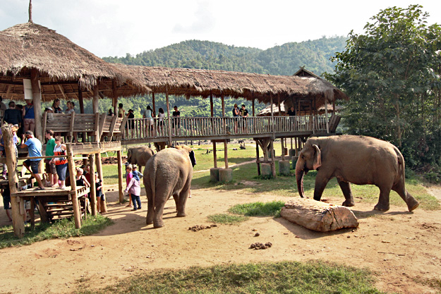 Elephants enjoy a feast of fruit as guests look on from a viewing platform