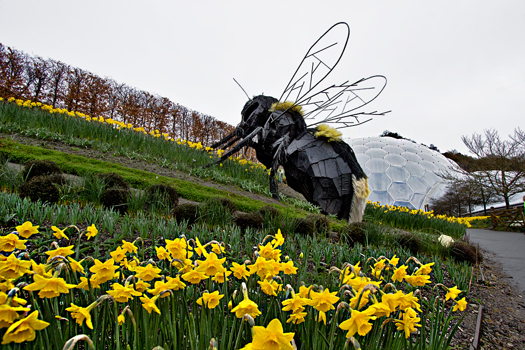 England-Cornwall-Eden-Project-Biomes-and-Giant-Bee