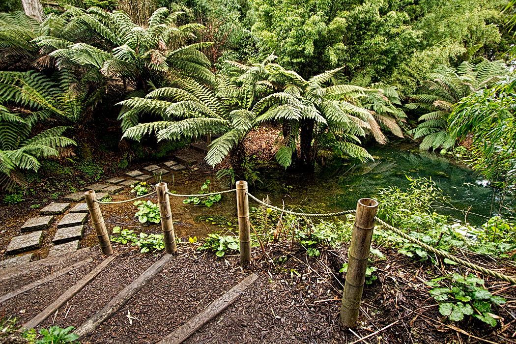 Photo the jungle at lost gardens of heligan