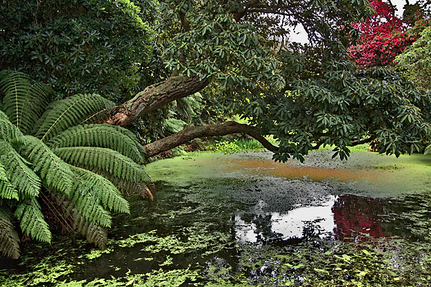 "A ravine at The Lost Gardens of Heligan, planted with tropical species, is appropriately named ""The Jungle"""
