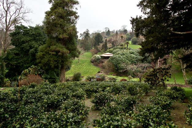 Tea plantation at Tregothnan Historic Gardens