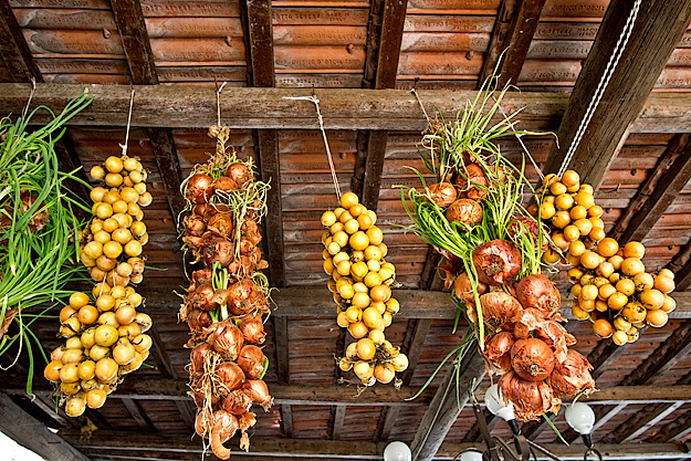 Onions and yellow tomatoes hang to dry at Fattoria Terranova