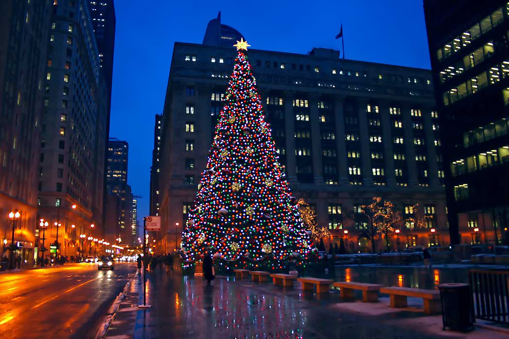 giant christmas tree in daley plaza in downtown chicago - Christmas Tree In Chicago