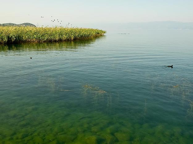 The crystal clear water of Lake Ohrid, in Ohrid, Macedonia
