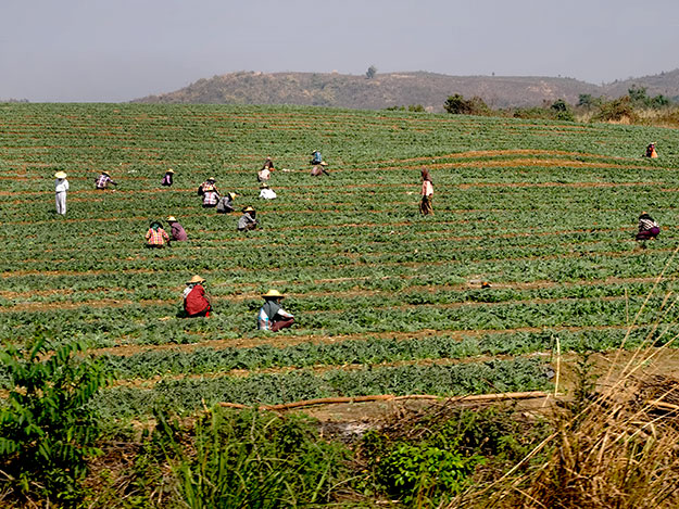 The train to the Gok Teik Gorge passes by farm fields where workers wear conical hats as protection from the sun
