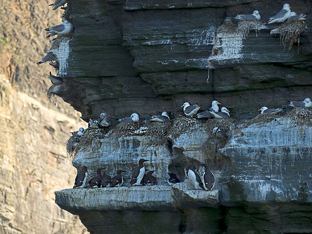 Sea birds nest on a sea stack at the Cliffs of Moher, one of the most popular tourist sights on the Wild Atlantic Way