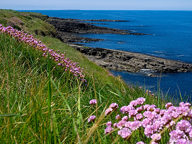 Wildflowers decorate Mullaghmore peninsula in County Sligo, Ireland