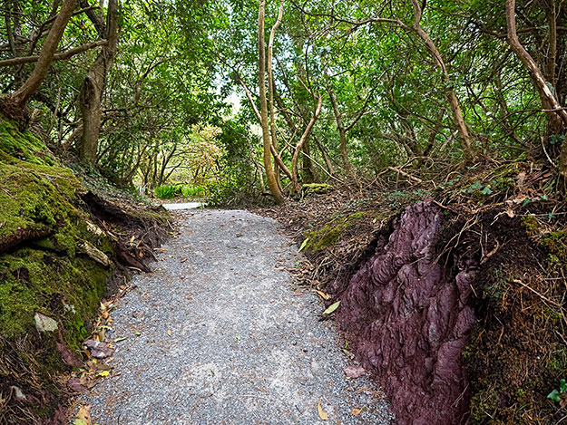 The seaside trail at Parknasilla Resort on the Kerry Peninsula. The color of the rocks in the foreground have NOT been manipulated - they were the most unusual shade of purple I have ever seen in rocks