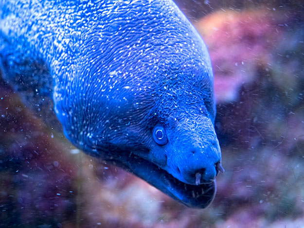 A giant eel decides if I might be prey
